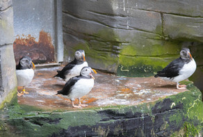 Tierpark_Dälhölzli-23.jpg