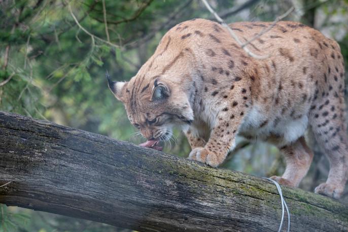 Tierpark_Goldau-117.jpg