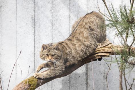 Tierpark_Dälhölzli-35.jpg