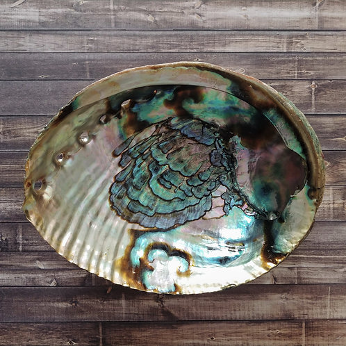 Abalone Shell - extra large