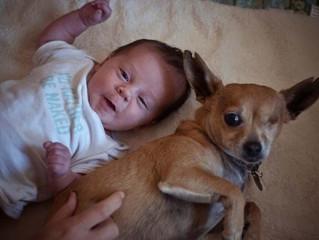 10 Benefícios do Convívio Entre Criança e Cachorro