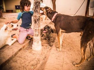 Garoto Mostra que Não Existe Idade Para Salvar Cães Abandonados -Uma História Real