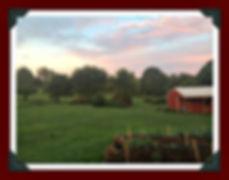 our farm back yard.jpg