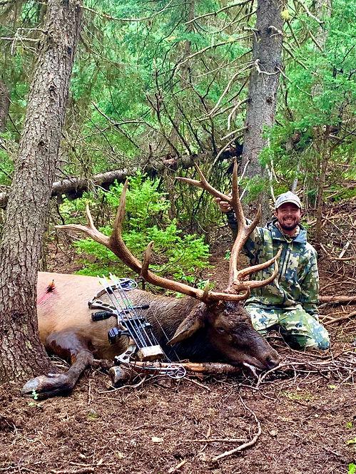 andy elk.jpg