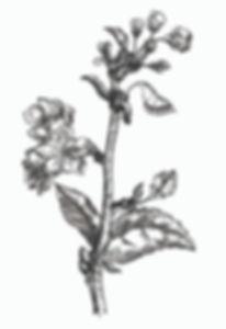 shutterstock vintage ink apple blossom c