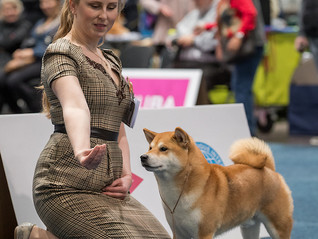 "Выставка: ""WORLD DOG SHOW 2017 & WORLD CLUB SHOW 2017"""
