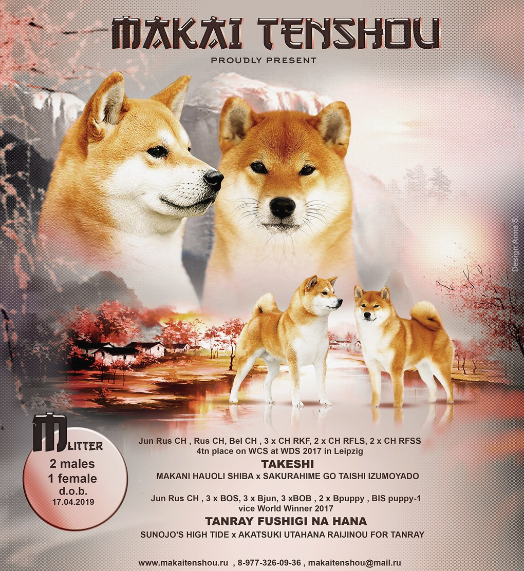 Щенки от Takeshi и TANRAY FUSHIGI NA HANA