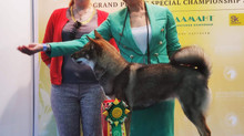"Выставка: ""International Dog Show ""Mazover Memorial 2019"" (CACIB FCI)"""