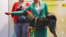 "Выставка: ""International Dog Show ""Mazover Memorial 2019"" (CACIB FCI)"""