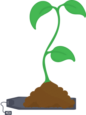 Steeped-bag-seedling01.png
