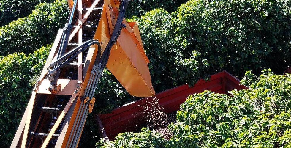 1# Brazil: Fazenda Serrinha
