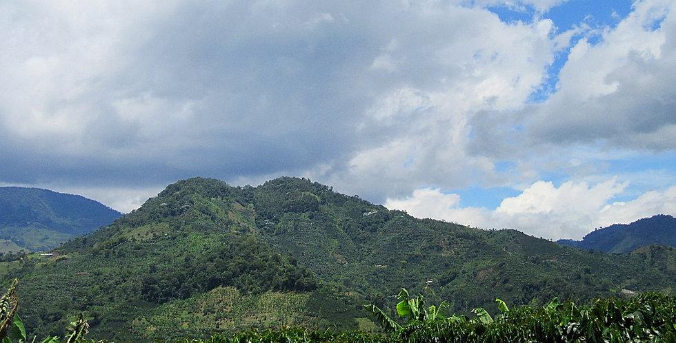 1# Organic Colombian