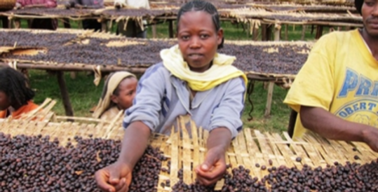 1# Organic Ethiopia-Yirgacheffe