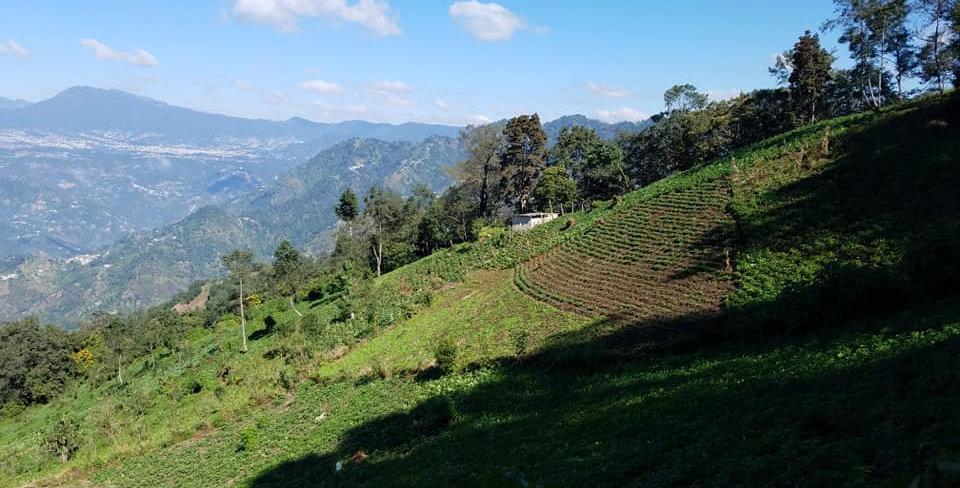 1# Organic Guatemala
