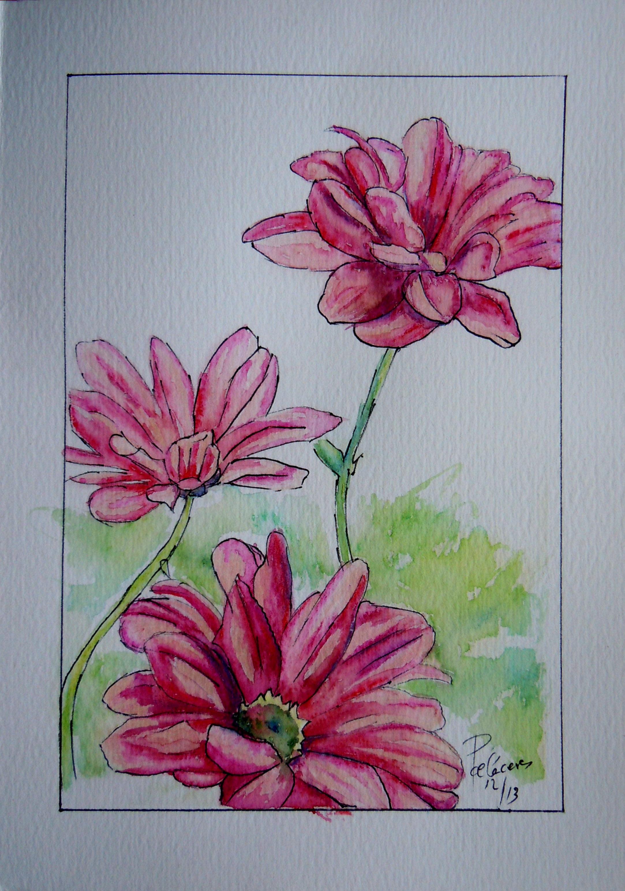 tres margaritas rosas