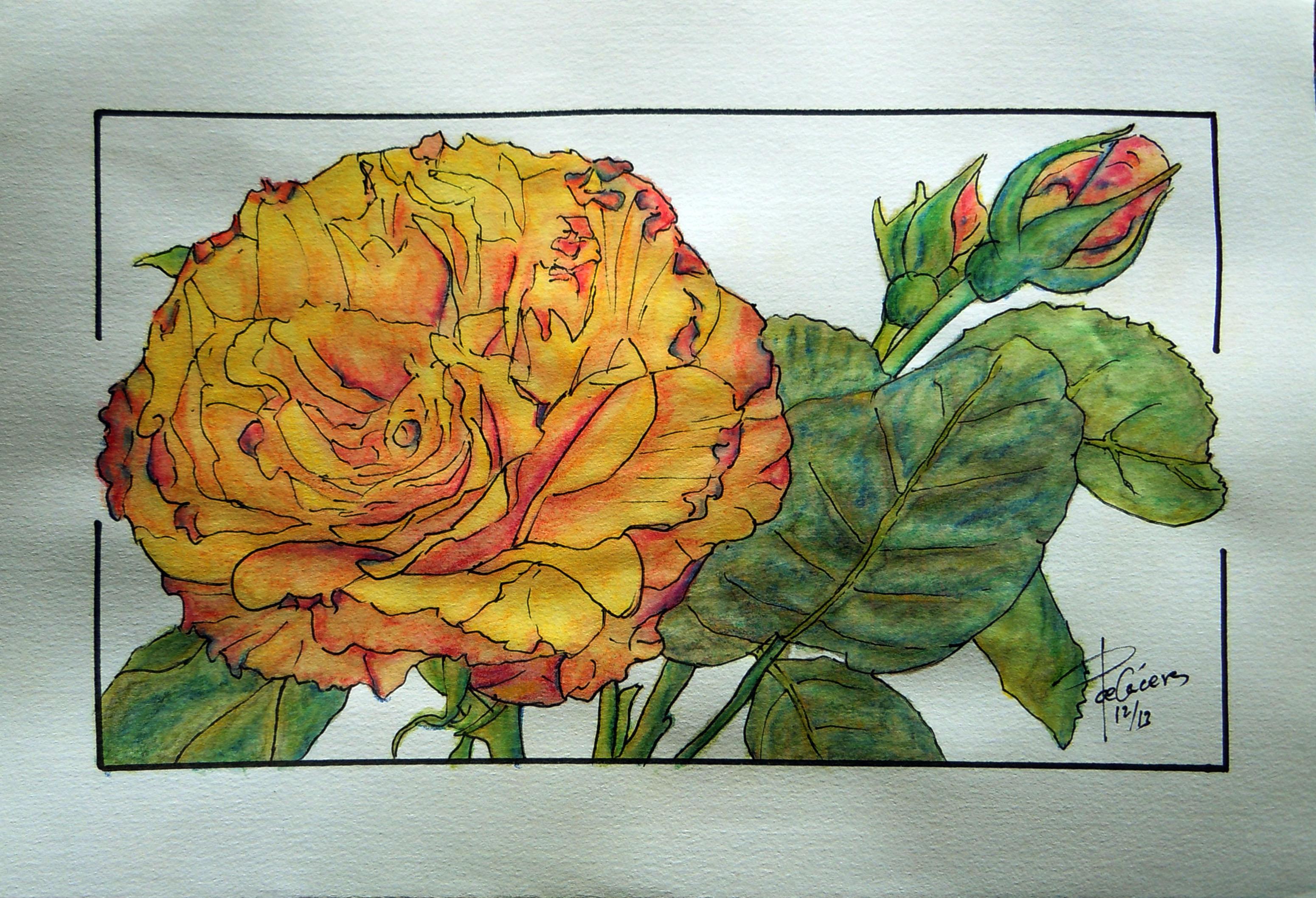 Rosa amarillenta