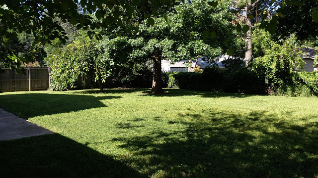 yard after.jpg