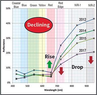 declining_tree_symptoms.jpg