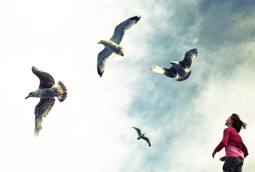 Mabel with gulls.jpg