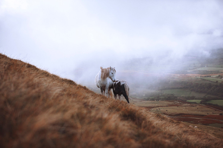 LAYLA-HORSE.jpg