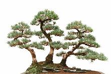 bonsai group planting