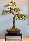 oval bonsai pot with bold lines
