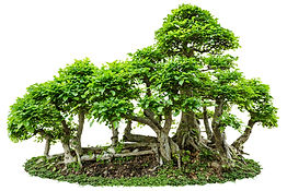raft style bonsai