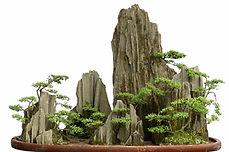 penjing bonsai landscape