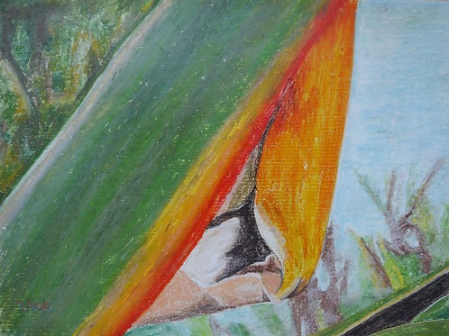 Bird of Paradise Painting - Parrot of Heaven