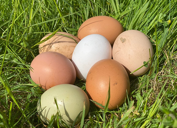 Free Range Chicken Eggs x 6