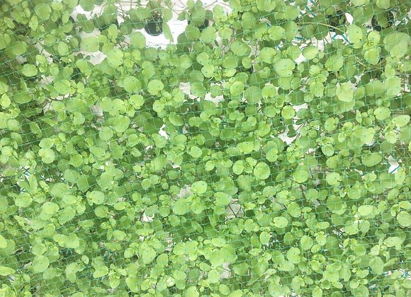Watercress 80g