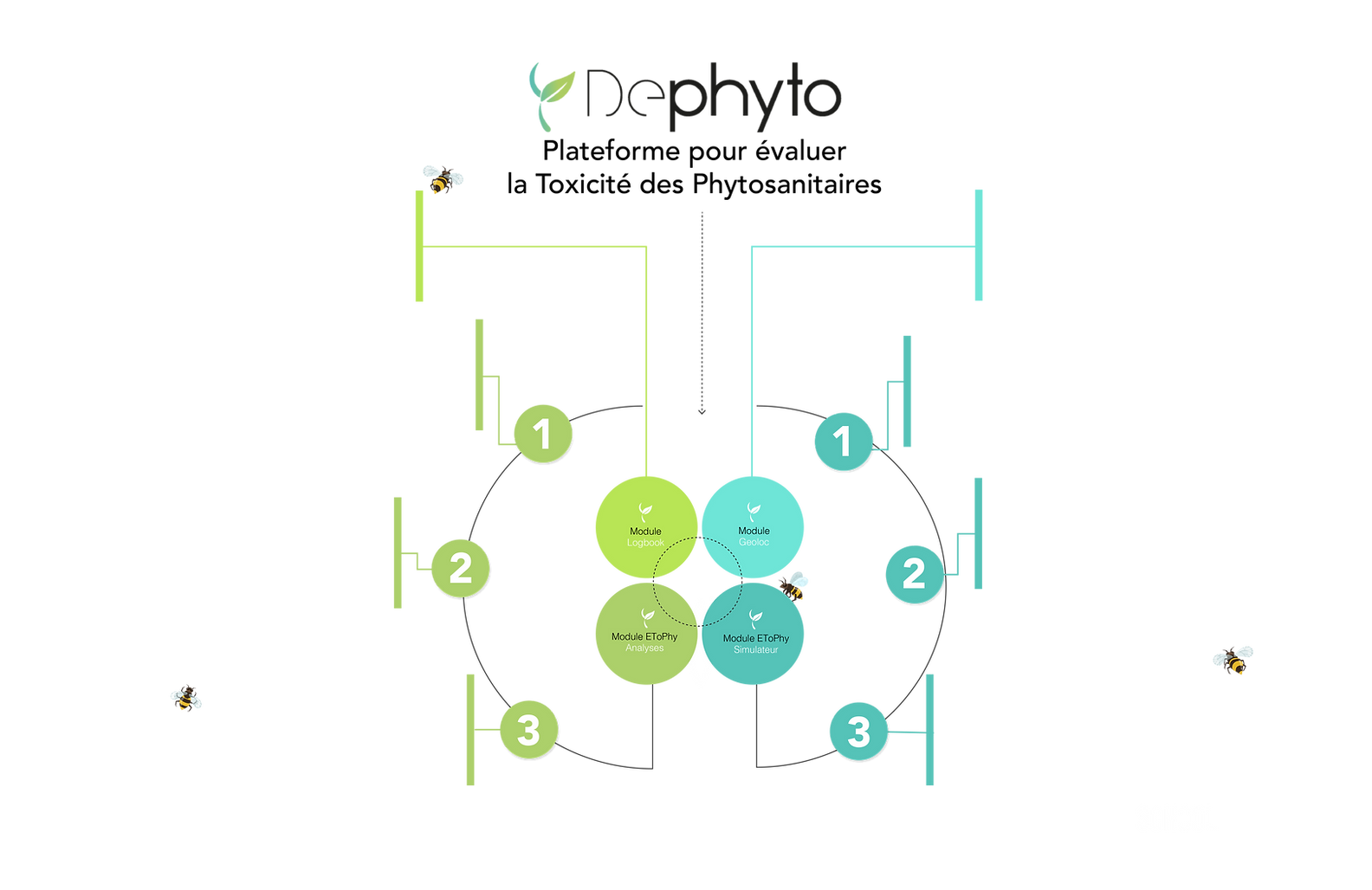 Gráfico Etophy 4v-02.png