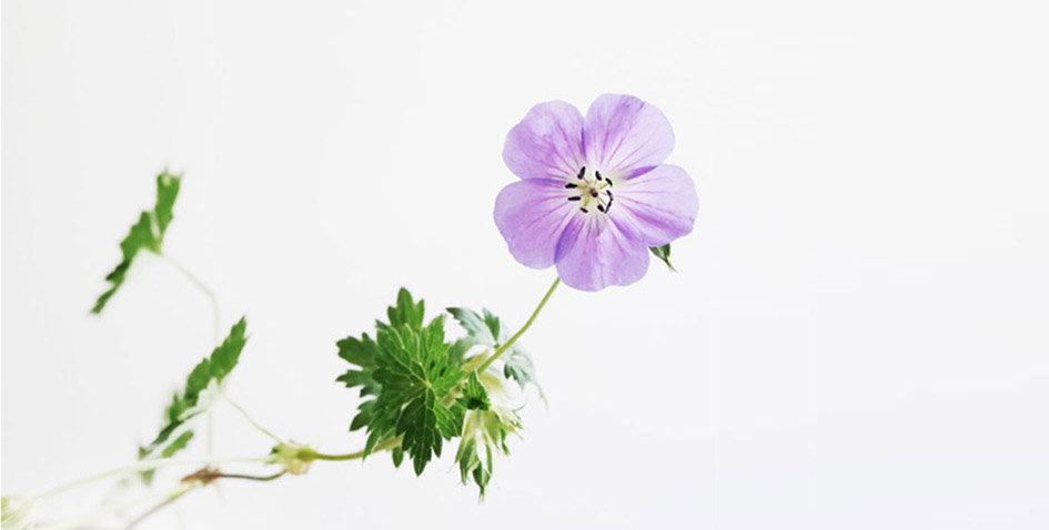 blomlang.jpg