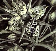 beetle flower copy_edited.jpg