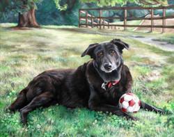 Greatest Soccer Dog Ever