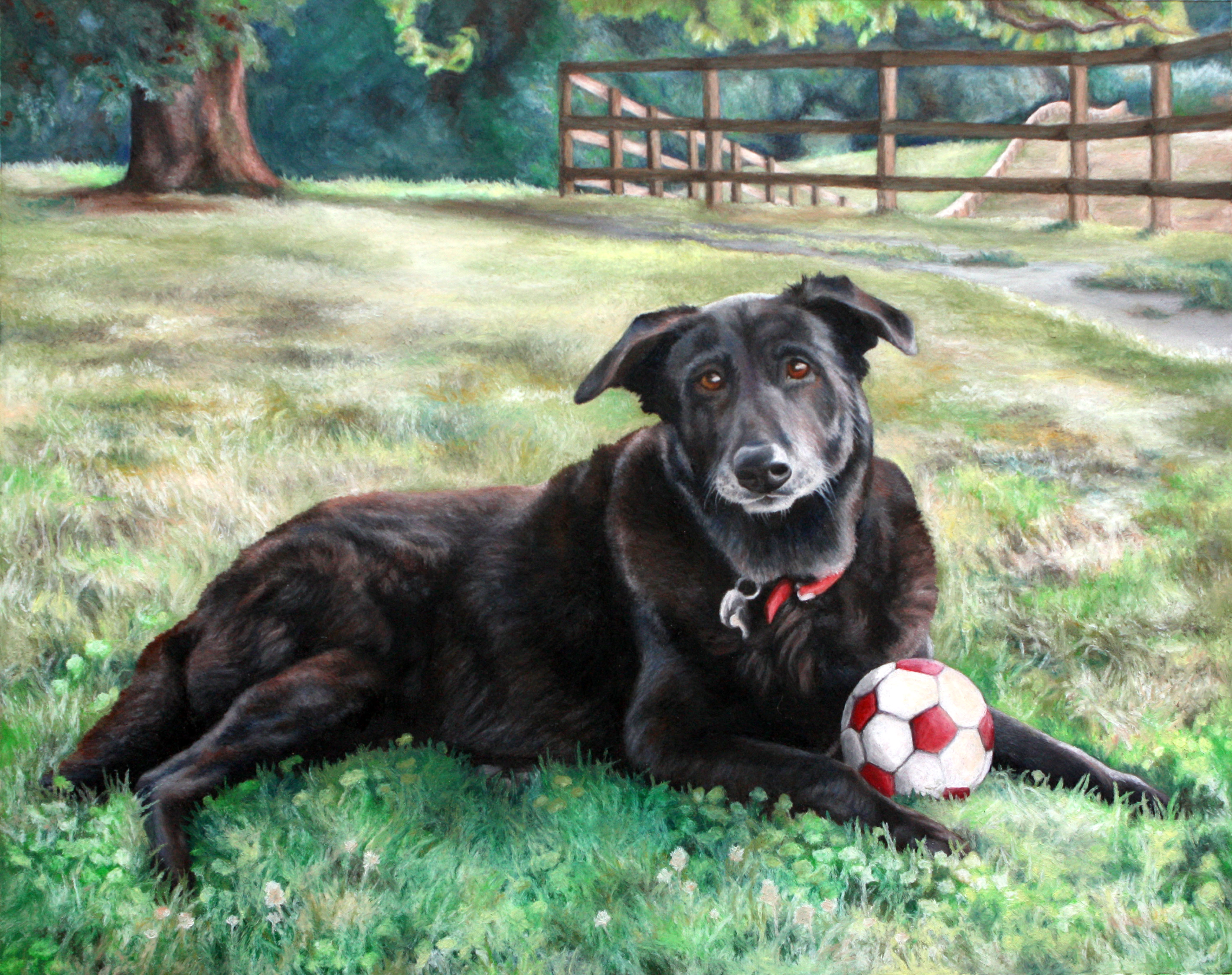 Shelby_ Greatest Soccer Dog Ever