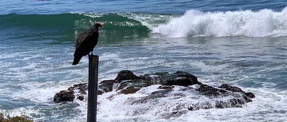 Nature,Half Moon Bay 2019