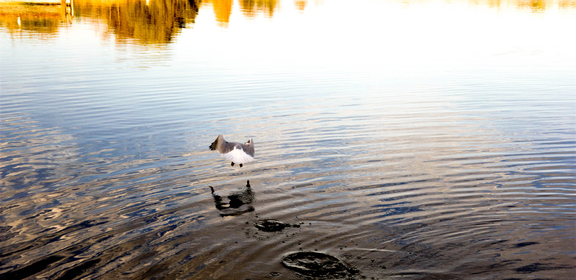 Nature, Shoreline Lake 2020