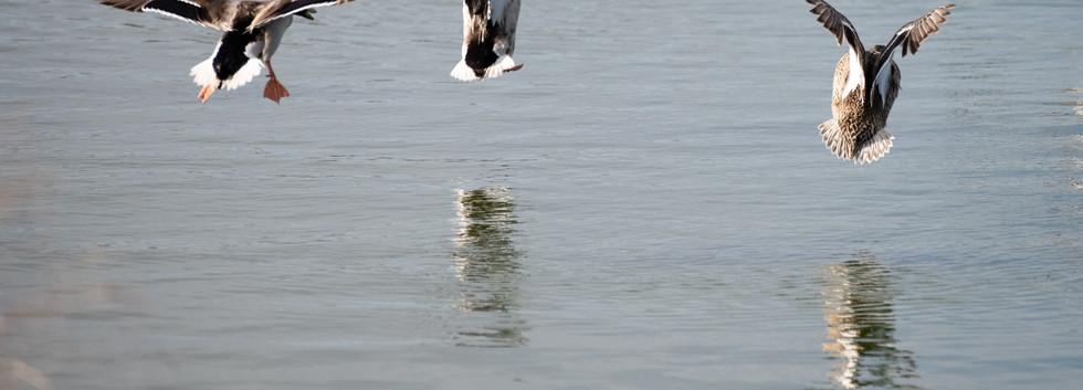 Nature, Shoreline Lake 2020 2020 bay -2 - Co