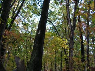 Appalachian Trail Landscape Conservation Initiative