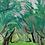 Thumbnail: Olive Grove 10 x 10