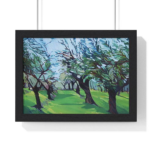 Olive Grove Framed Print
