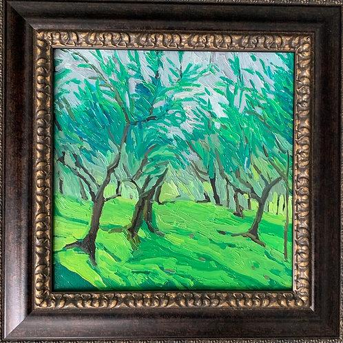 Olive Grove 10 x 10