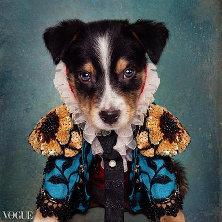 Tammy Swarek - Shelter Pets Project