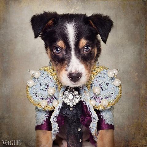 Shelter Pets Project Loki - Tammy Swarek