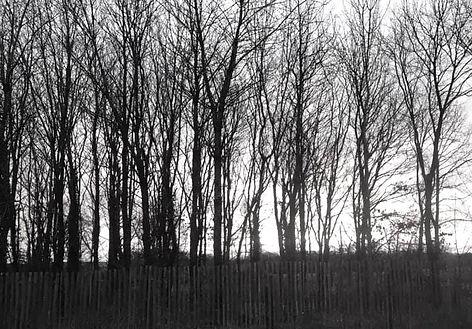A l'orée du bois, photo noir & blanc, lisière de forêt, Saint-Hélen