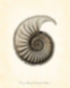 Shell Theorem.png