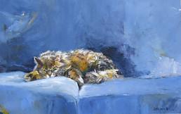 Cat on a Blue Sofa