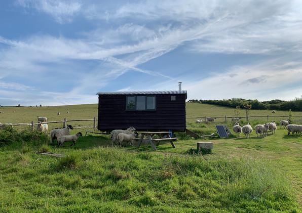 16'hut and sheep.JPG