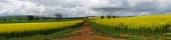 dreamstime_m_45297388 golden crops 2.jpg